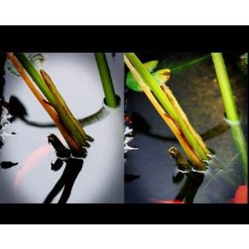 Circular Polarizing filter for Fujifilm FinePix S8400W